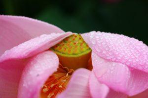 Mitti Attar душа индийского дождя